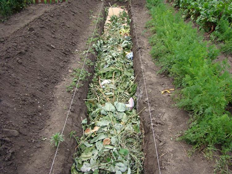 Выращивание огурцов осенью 37