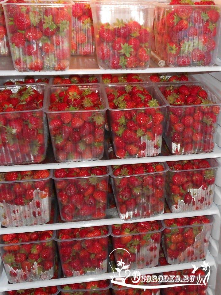 урожай ремонтантной клубники