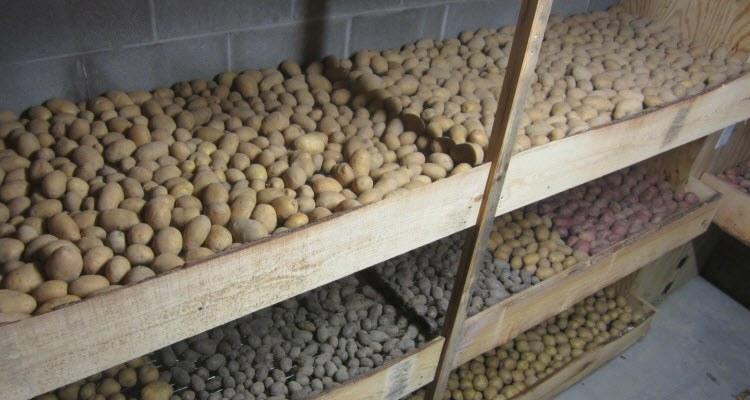 как просушить картофель