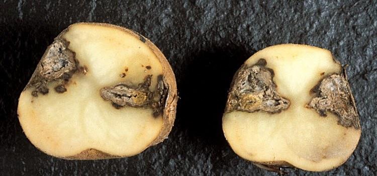 от каких видов паразитов помогают тыквенные семечки