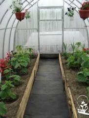 Технология выращивания огурцов в теплице – свежие овощи круглый год!