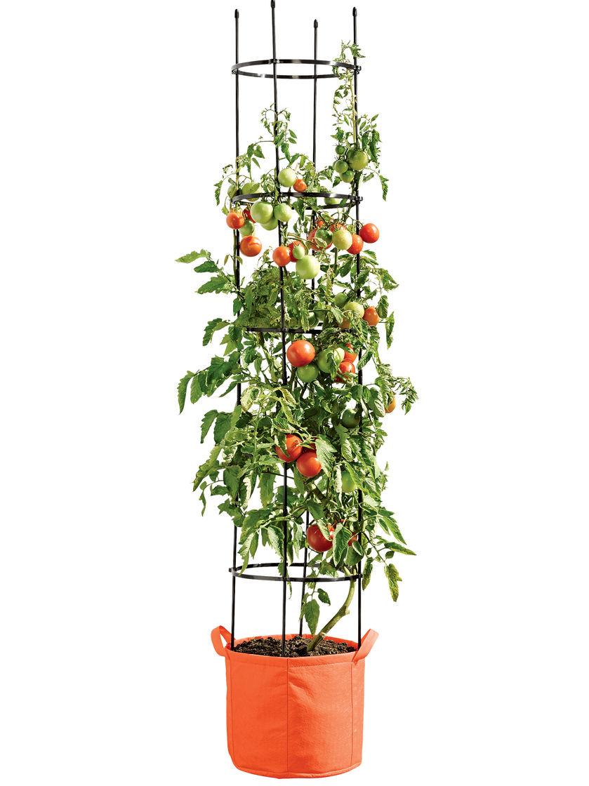 Выращивание помидоров в мешках 8