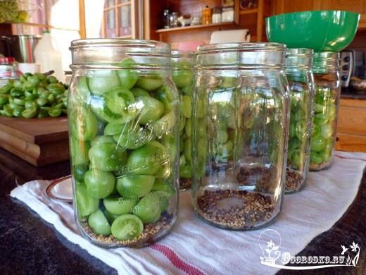 retsept prigotovleniya zelenykh pomidor