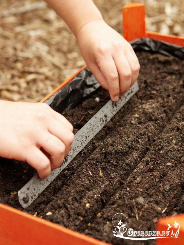 бороздки под семена моркови