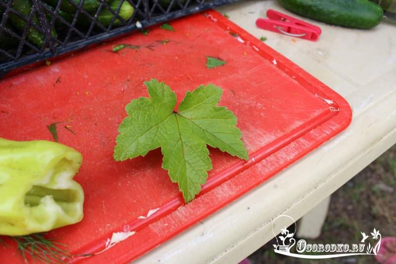 добавляем лист смородины