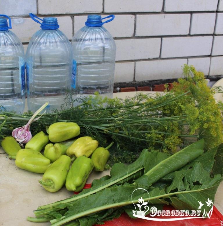 Выращивание огурцов в бутылке 92
