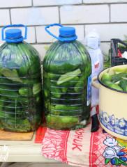 Соленые огурцы в пластиковой бутылке на зиму