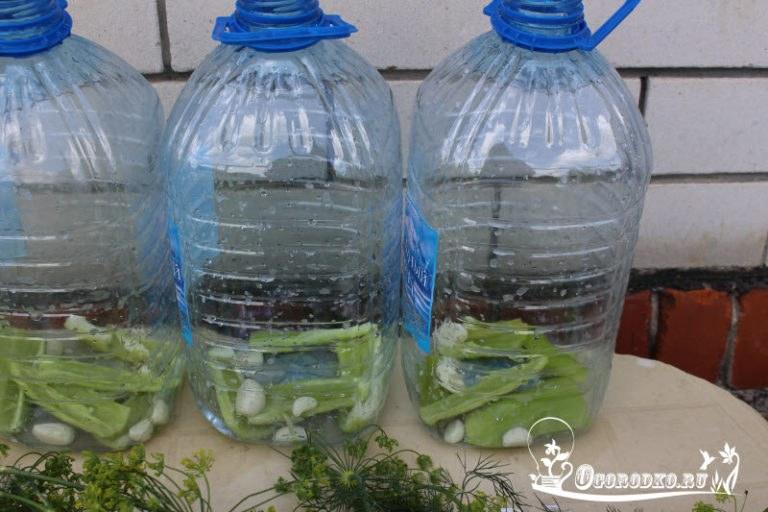 Выращивание огурцов в пластиковых 5 литровых бутылках выращивание 90