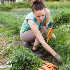 После чего сажают морковь под зиму 91
