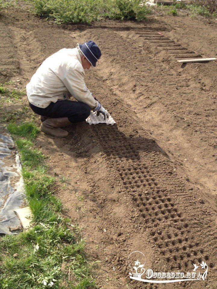 как правильно посадить морковь осенью