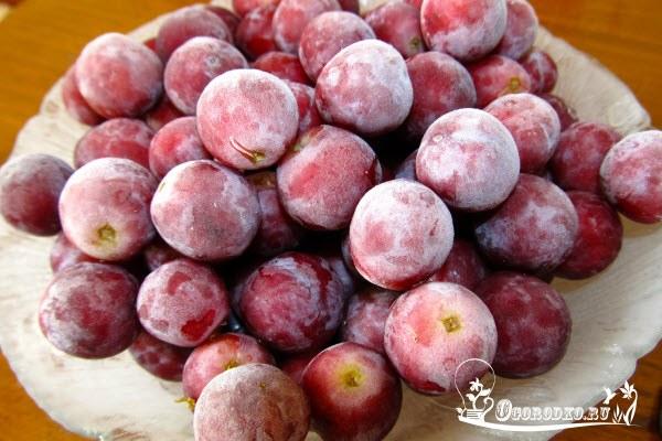 Как лучше сохранить урожай винограда