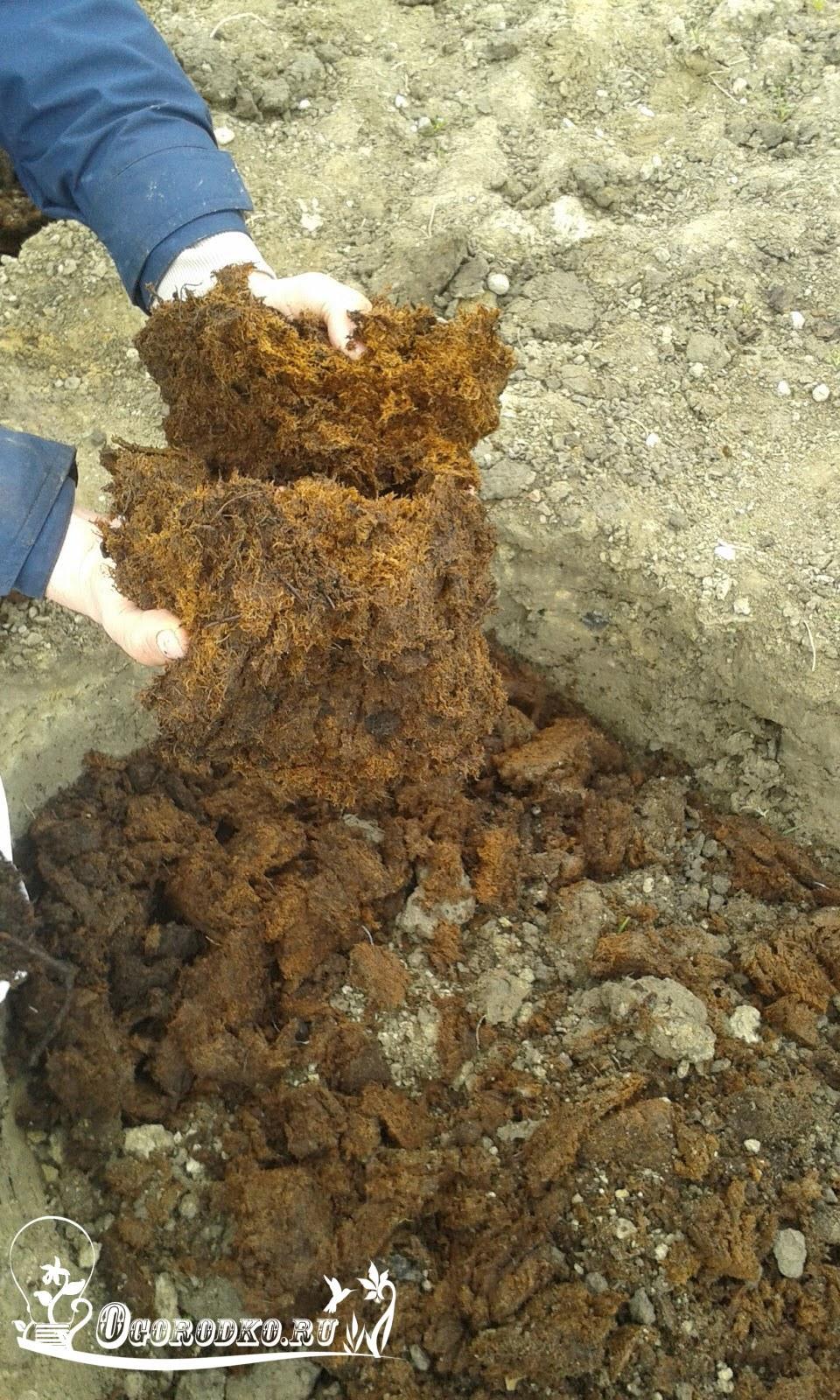 podgotovka yamy pod posadku abrikosov