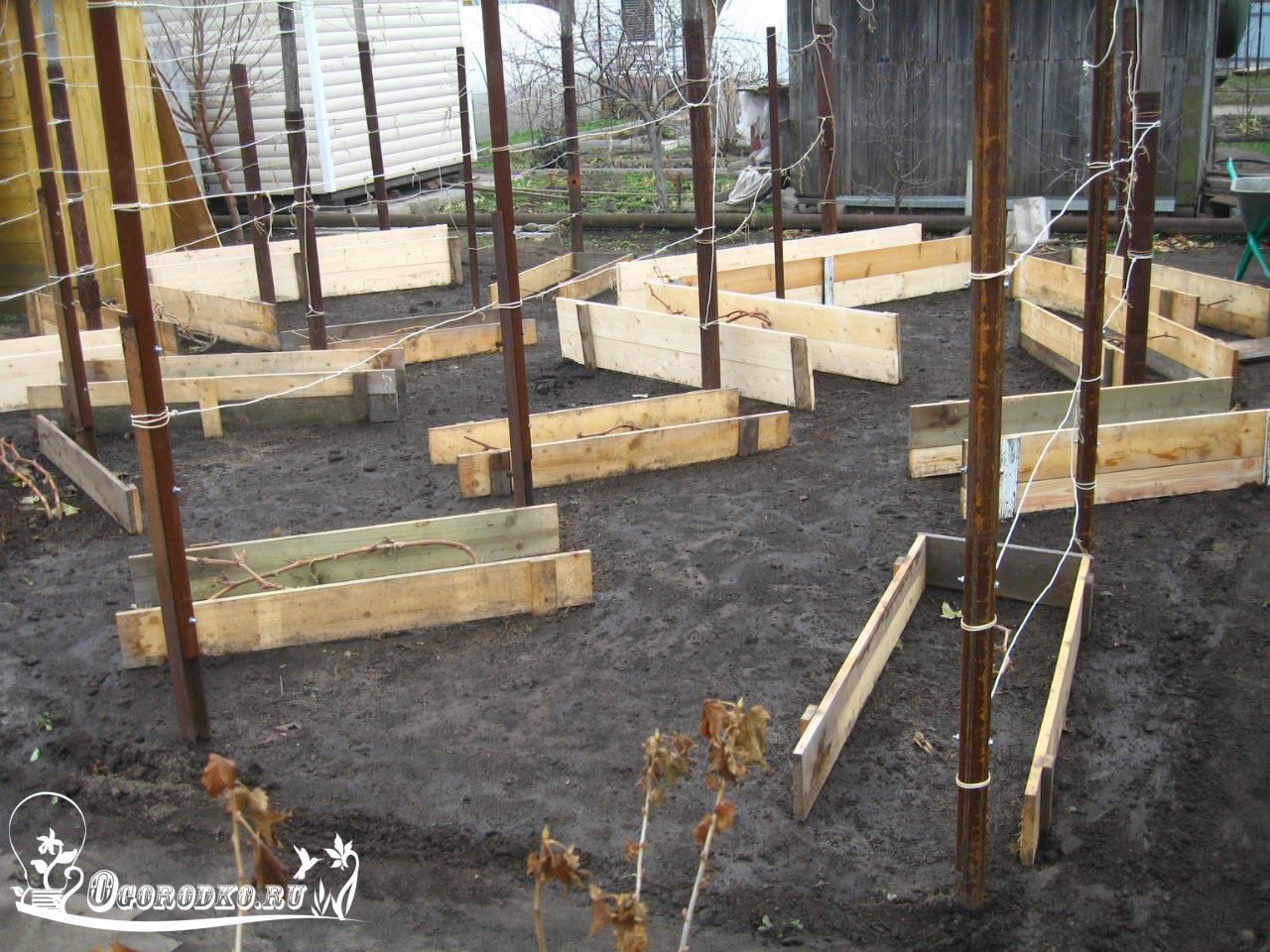 Укрытие винограда: чем и как укрыть виноград на зиму сады.