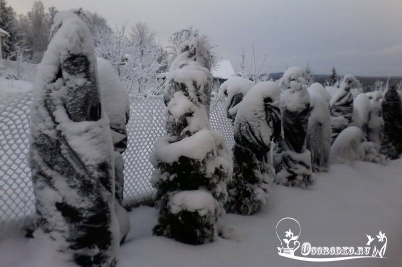 utepleniye tui na zimu