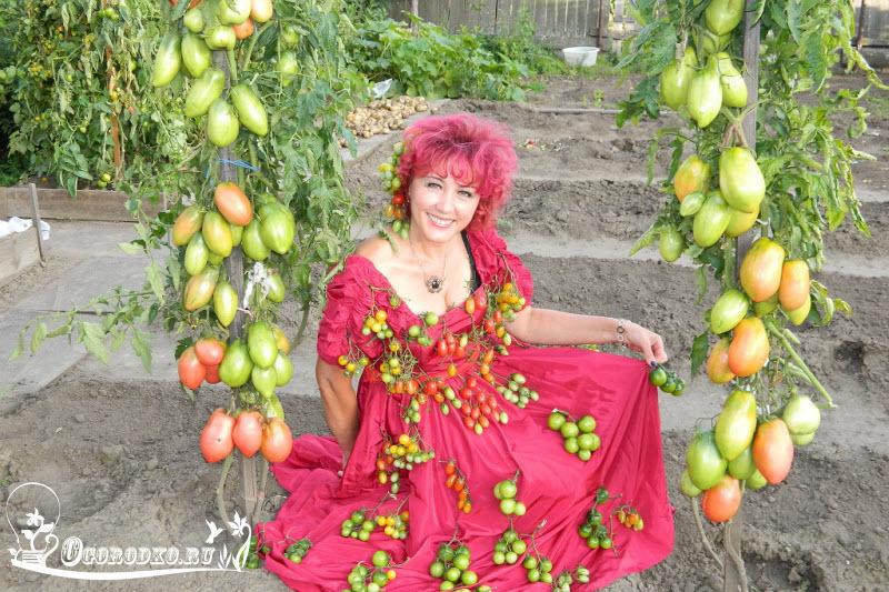 Наталья Щербинина томаты