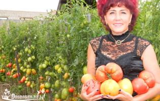 Хорошая рассада помидоров – Наталья Щербинина из Минусинска делится опытом