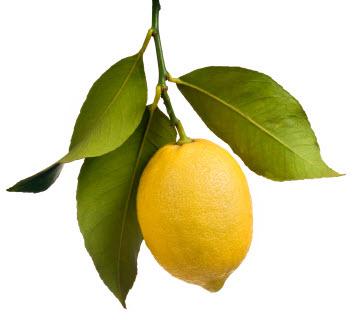 опадают листья лимона