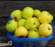 Яблоня Славянка – как вырастить дерево на участке?