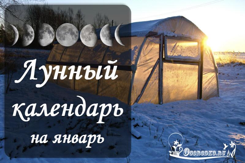 Январь: календарь садовода