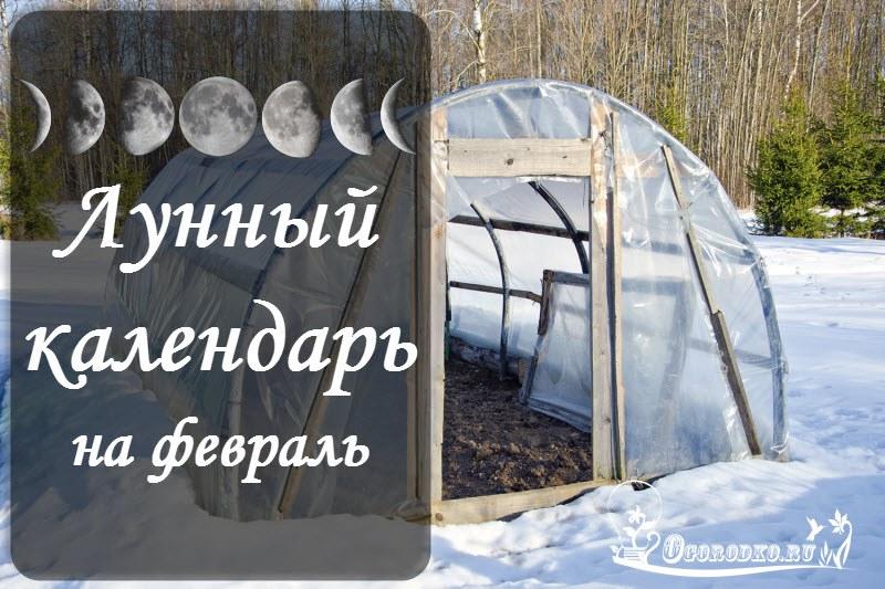 Лунный посевной календарь на февраль