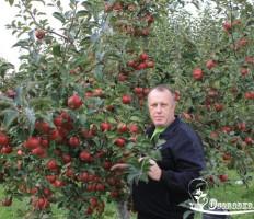 Пепин Шафранный – яблоня, которую стоит посадить в саду!