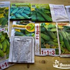 Семена огурцов для открытого грунта, лучшие сорта, отзывы