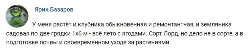 Подкормка рассады клубники - Саду рад!
