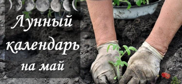 Лунный посевной календарь на май 2017 года садовода и огородника