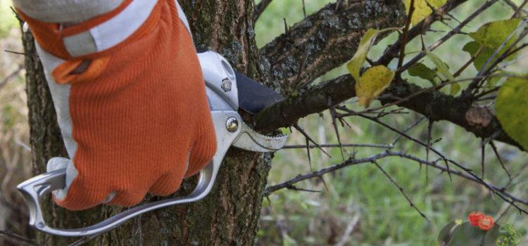 Обрезка абрикоса весной – схема или как сделать так, чтобы дерево хорошо плодоносило