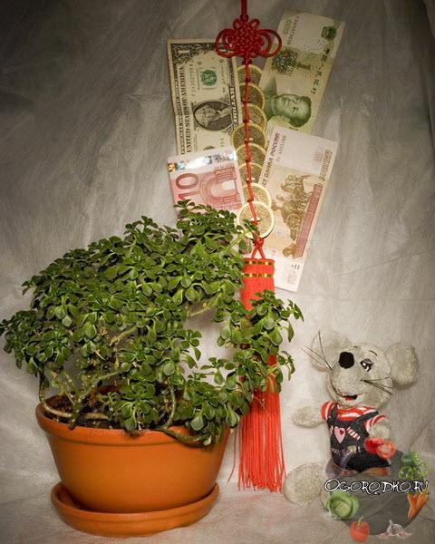 приметы, связанные с денежным деревом