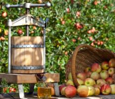 Заготовки из яблок на зиму – топ 7 золотых рецептов!