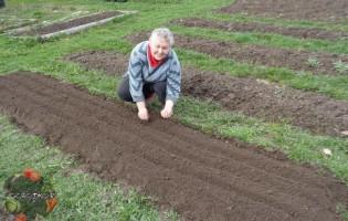 Посев моркови под зиму — как вырастить хороший урожай?!