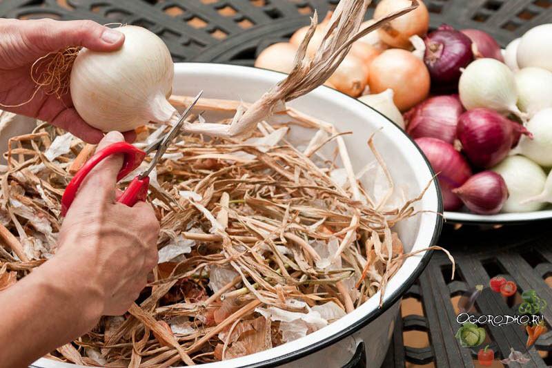 как правильно хранить лук