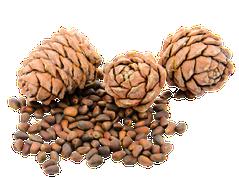 Кедровые орехи полезные свойства и противопоказания