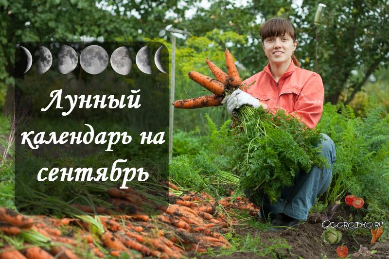 Лунный посевной календарь на сентябрь