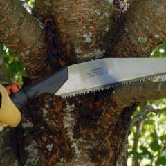 Как обрезать вишню осенью