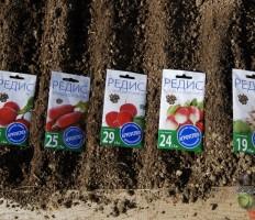 Когда сажать редиску весной в открытый грунт, чтобы собрать вкусный урожай?