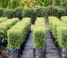 Кустарники для живой изгороди – как быстро и красиво облагородить участок?