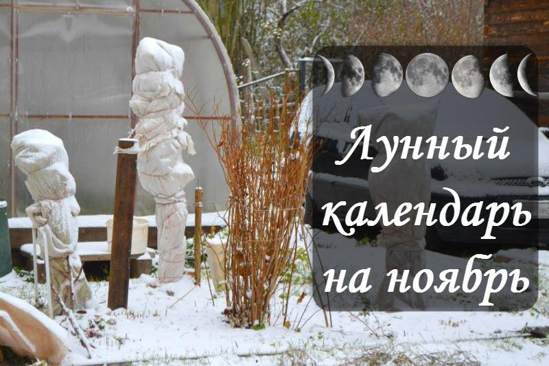 Лунный посевной календарь на ноябрь