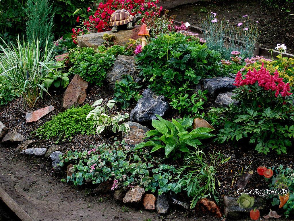 Каталог садовых цветов - названия, фото и описание 20