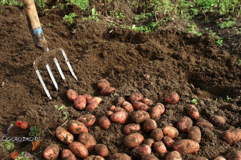 чем копать картошку