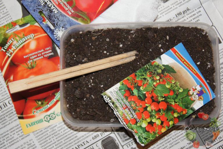 Когда сеять помидоры семенами на рассаду 312
