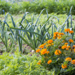 травы от вредителей
