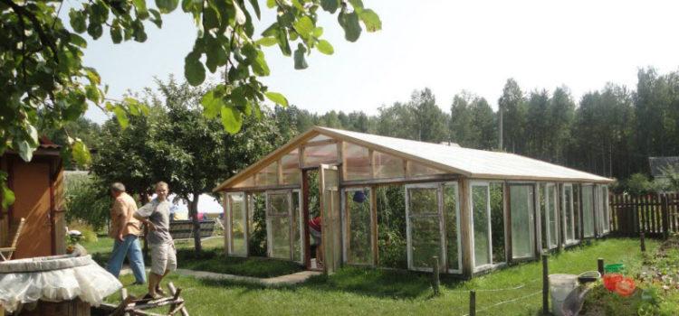 Теплица для помидоров своими руками – требования к конструкции и материалы для строительства