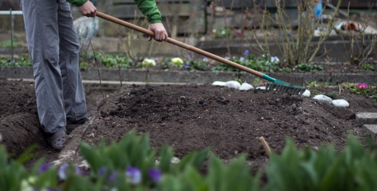 подготовка почвы под клубнику