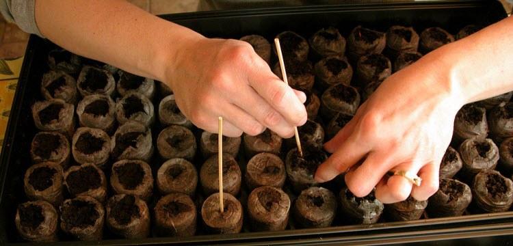 посев семян огурцов
