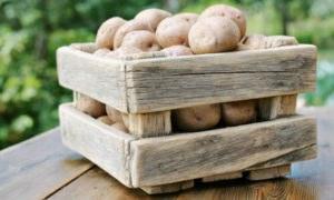 Хранение картофеля - в квартире, погребе, подвале, как сохранить урожай до весны