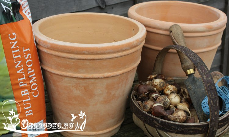 как правильно сажать тюльпаны