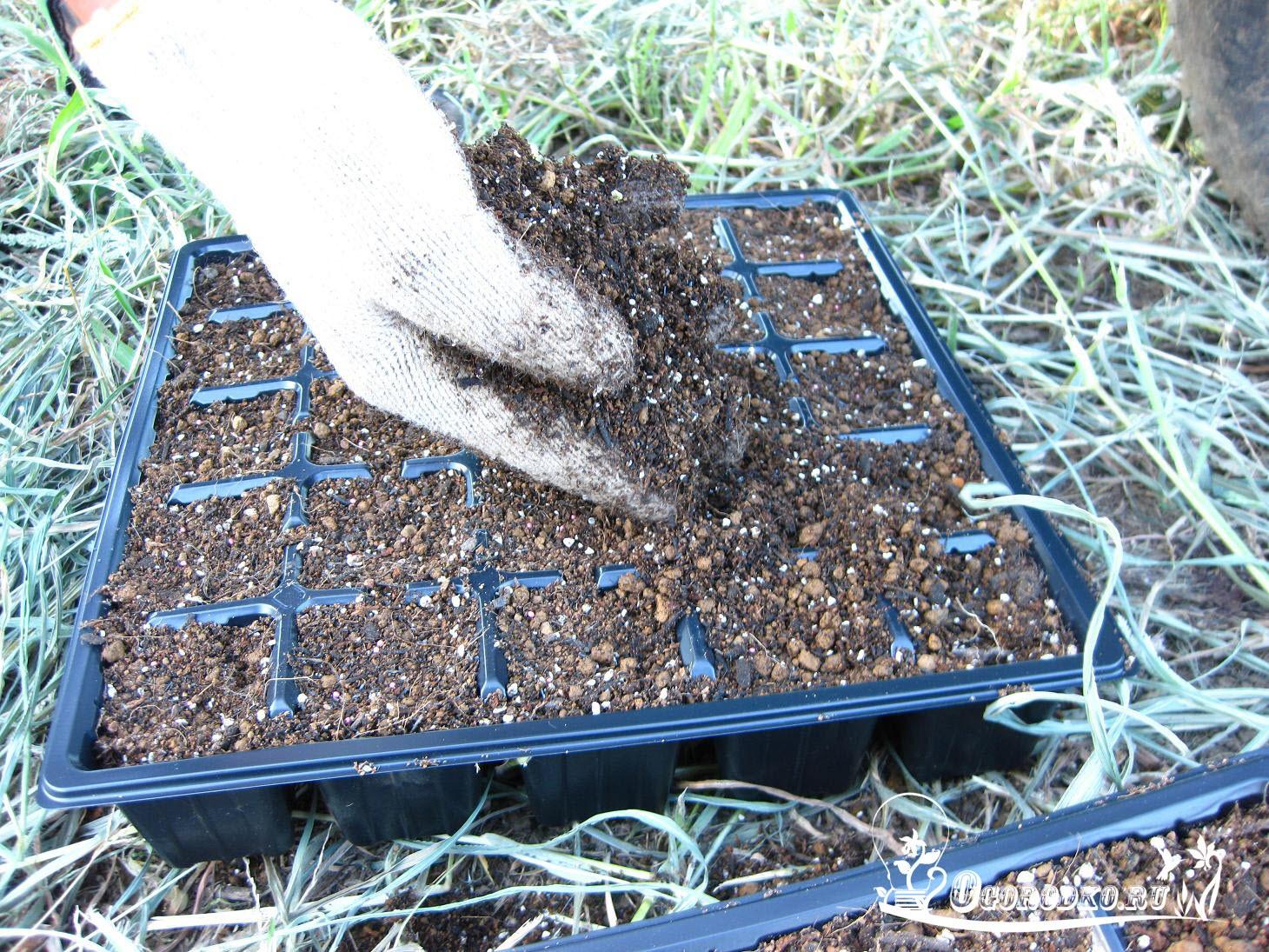 присыпаем семена цветной капусты почвосмесью