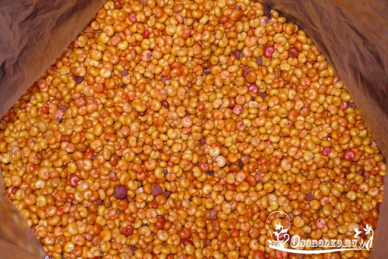 семена лимонника китайского